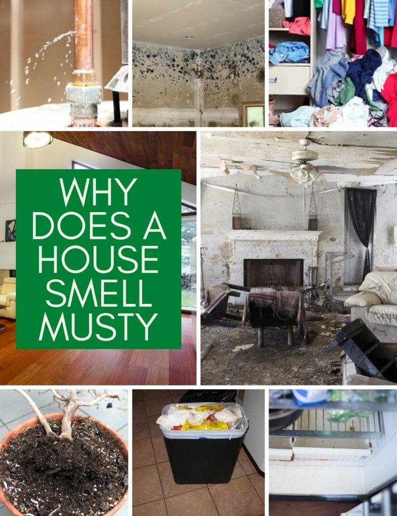 Why Does a House Smell Musty