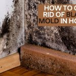 How to Get Rid of Black Mold in House