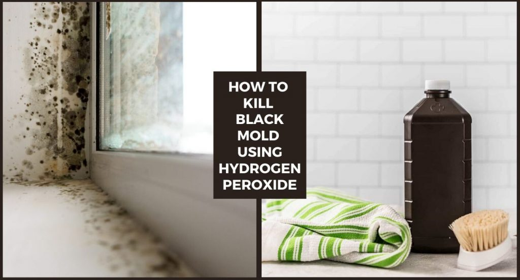 How to Kill Black Mold using Hydrogen Peroxide