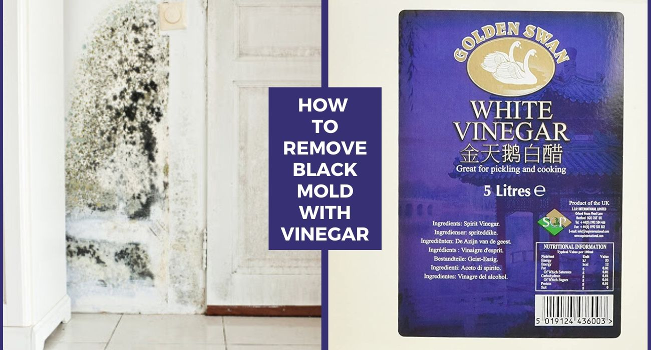 How to Remove Black Mold with Vinegar