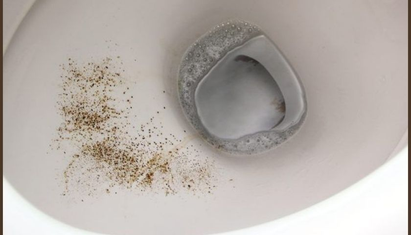 How to Remove Mold in Toilet Bowl