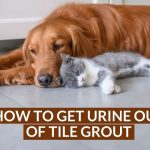 How to Get Urine Out of Tile Grout