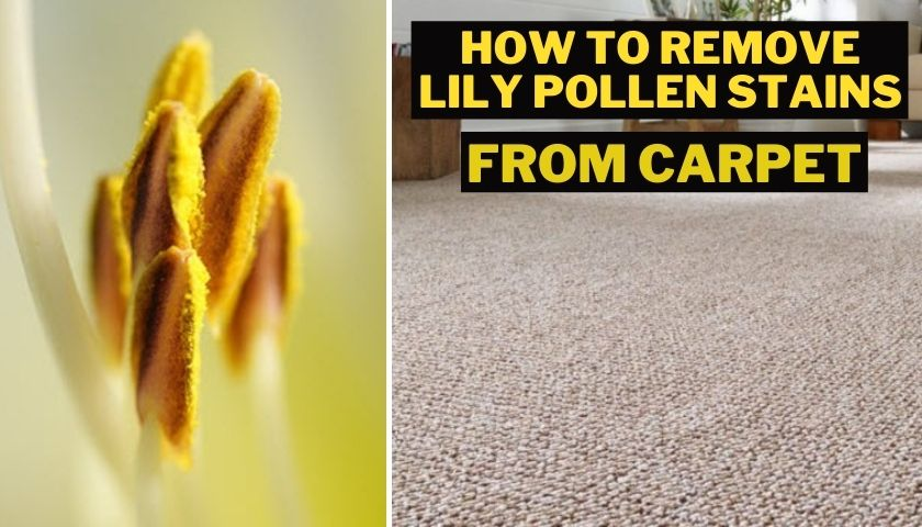 how to remove lily pollen stains from carpet