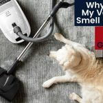 Why Does My Vacuum Smell Like Dog