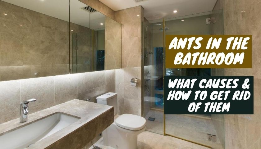 what causes ants in the bathroom