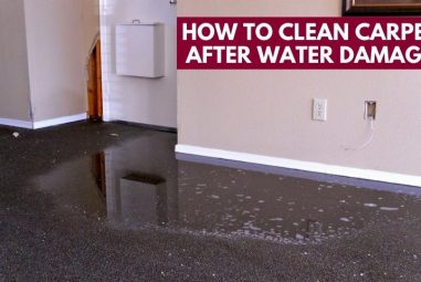 How to Clean Carpet After Water Damage | Lasting Solutions