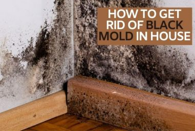 How To Get Rid Of Black Mold In House | Expert's Solution