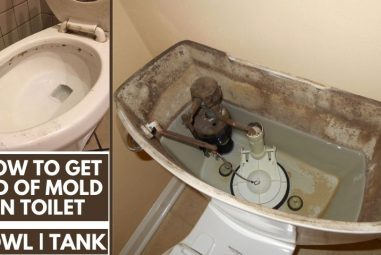 How to Get Rid of Mold in Toilet | Causes & Solutions