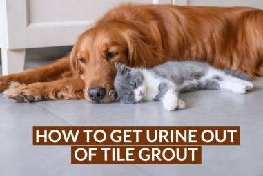 How to Get Urine Out of Tile Grout | Easily & Effectively