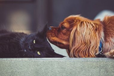 How to Keep House Smelling Good With Pets | Complete Guide