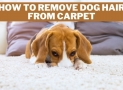 How to Remove Dog Hair from Carpet | With & Without a Vacuum