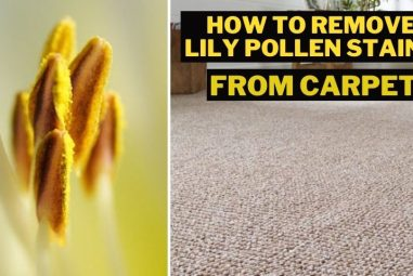 How to Remove Lily Pollen Stains from Carpet | Complete Guide