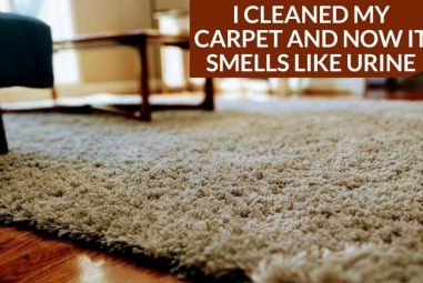 I Cleaned My Carpet and Now It Smells Like Urine | Why & How