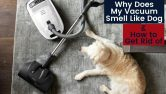 Why Does My Vacuum Smell Like Dog & How to Get Rid of