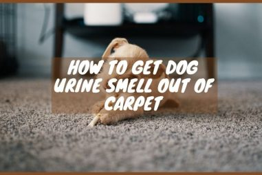 How to Get Dog Urine Smell Out of Carpet| 3 Effective Ways