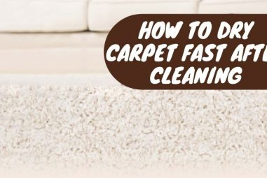 How To Dry Carpet Fast After Cleaning | Get Prompt Results